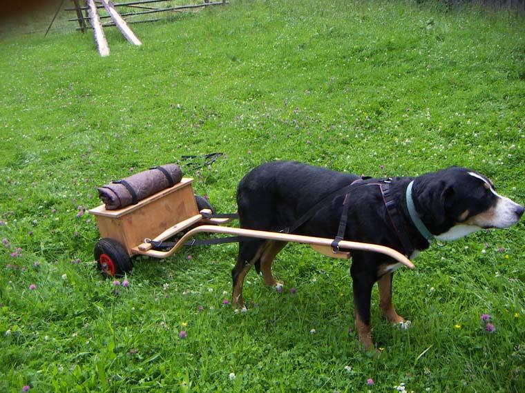 Zughunde - Pulmetgeschirr