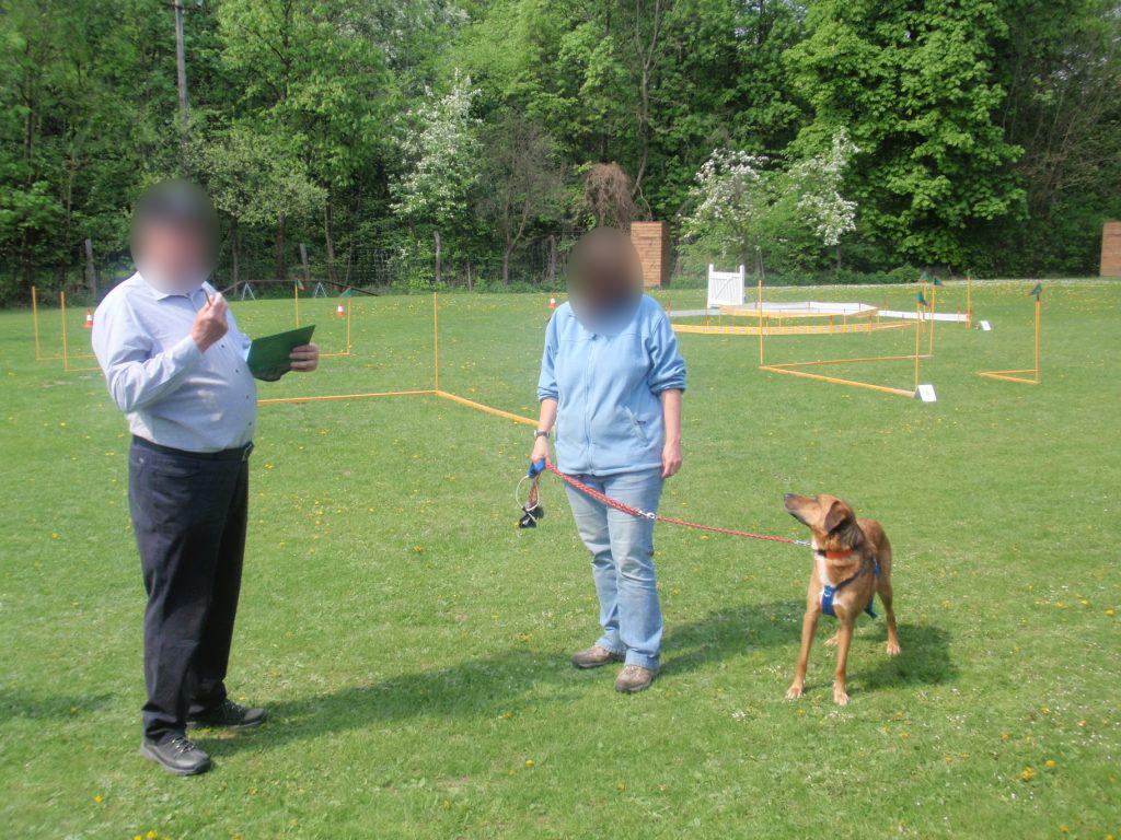 Zughunde - Kritik